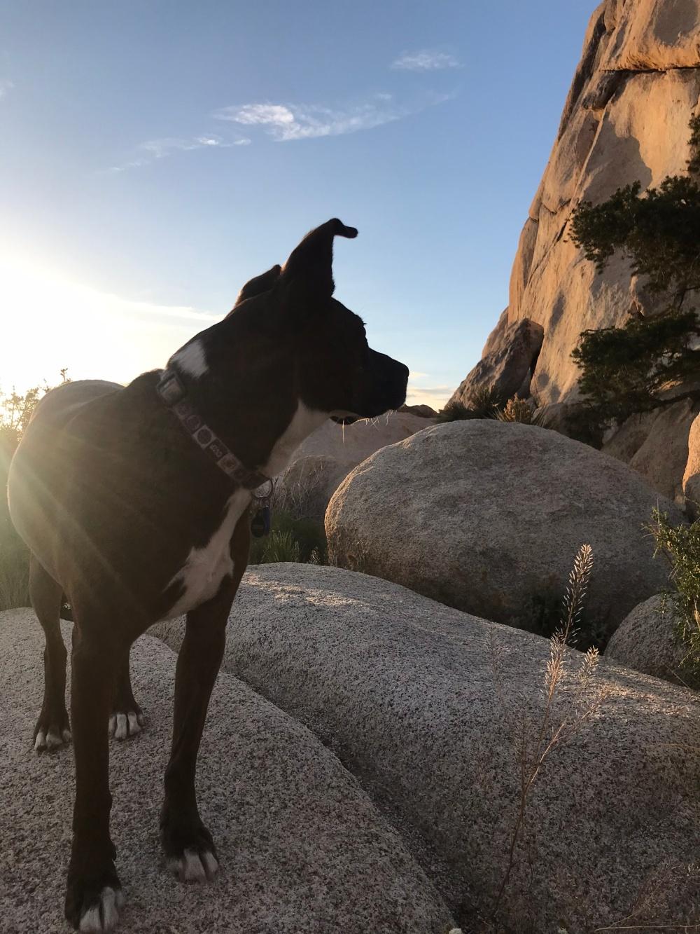Joshua Tree, sunshine, dogs