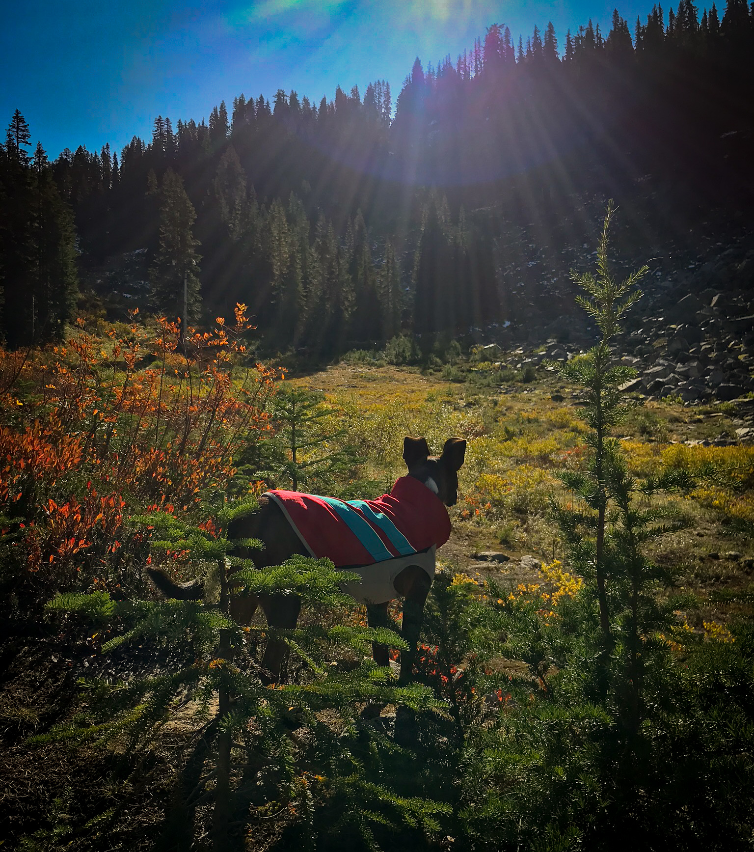 PCT, WA, hiking, dogs